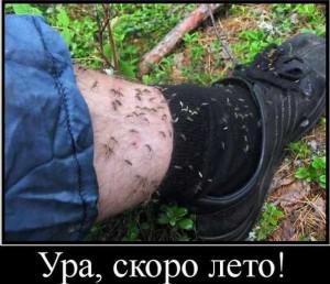 покусали комары