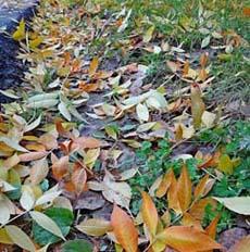 золотая осень фото