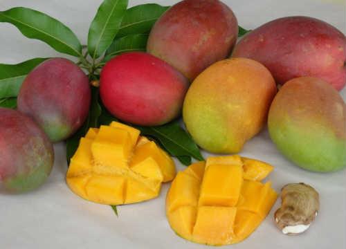 Экзотический фрукт манго фото