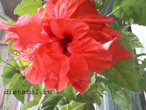аленький цветочек фото