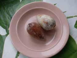 косточки авокадо