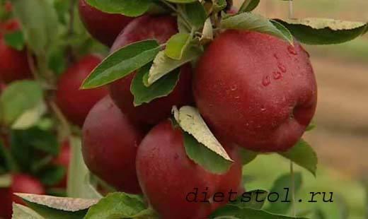 яблоки против подагры фото