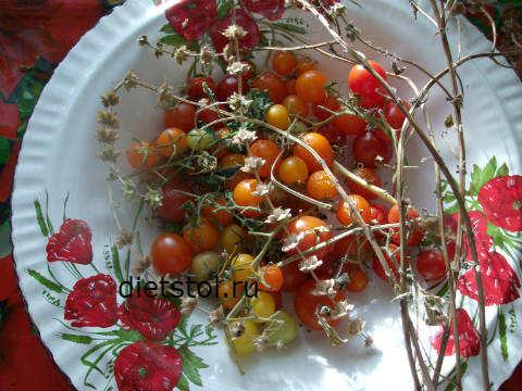 помидоры черри фото