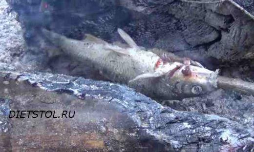 как приготовить рыбу быстро на костре в тайге , отдых в тайге, рыбалка фото